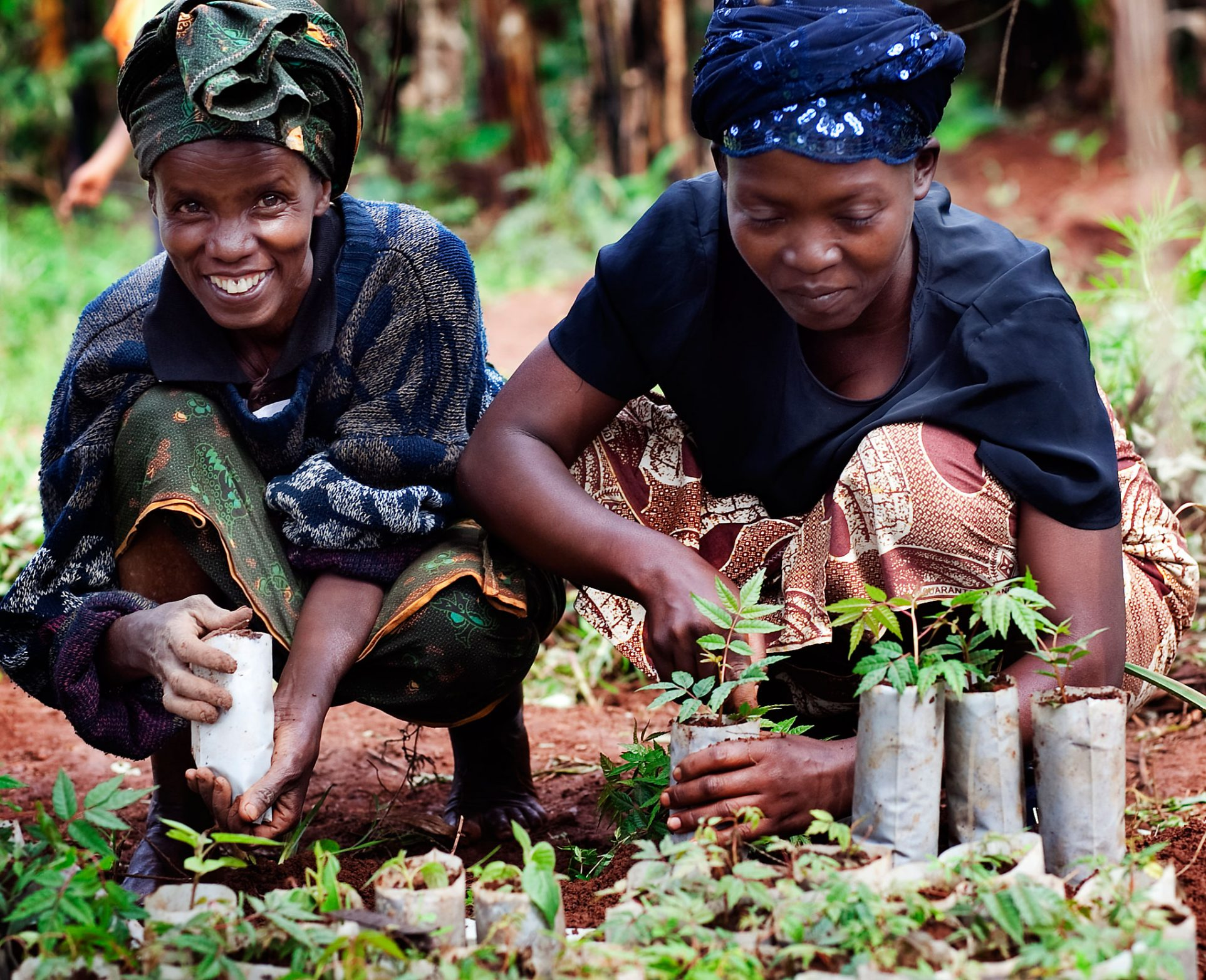 Loransi Mukarutagwenda and Domitila Mukanyirigira from Gasabo District, Rwanda are members in a farmers' cooperative. Together with the other members they run a tree nursery. They are preparing seedlings to be planted on their neighbours' farms.