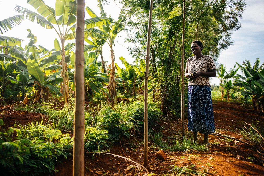 Benta Muga in Kenya is practicing agroforestry on her farm - planting trees together with crops. Photo: Amunga Eshuchi. Vi-skogen.
