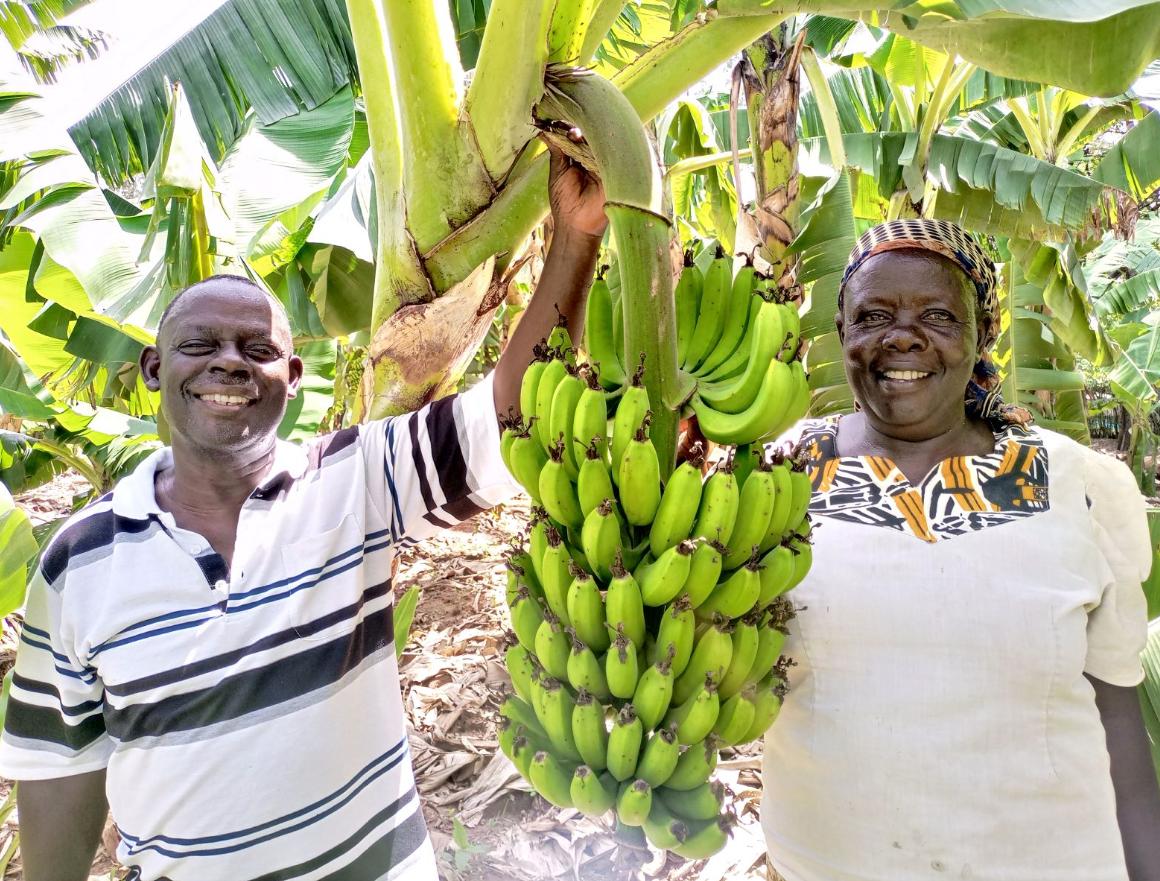 Farmers George Natembeya Matete and Imelda Nabangala. Photo Habil Onyango.